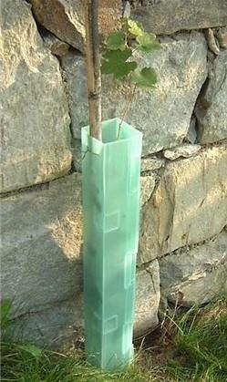 Der Schutz für die Reben und Obstbäumen - Plastik